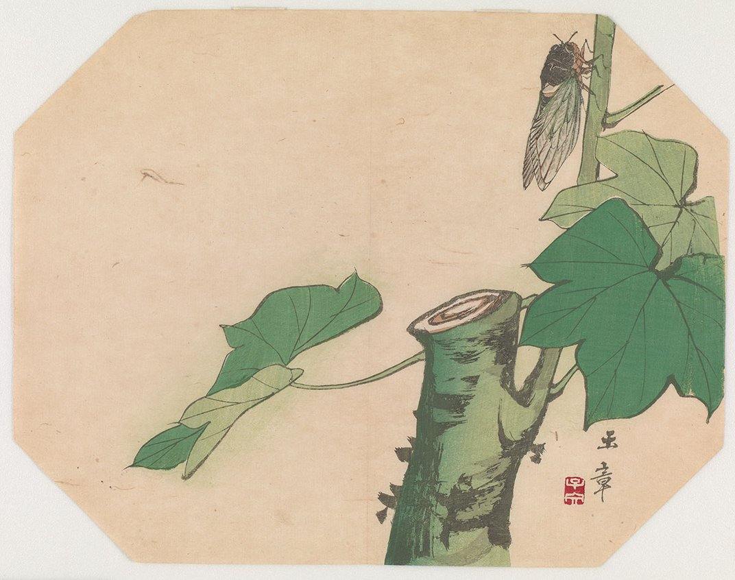 Color illustration on an octagonal canvas of a cicada climbing up a tree.