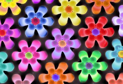 20110520102327vischallengeflowers.jpg