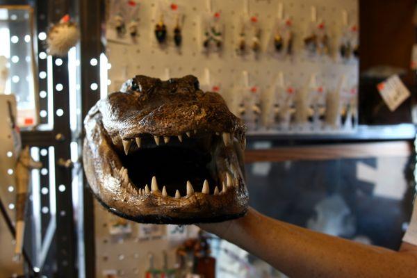 A dried caiman head for sale at Rattlesnake Ranch, a Southeastern Arizona novelty shop. thumbnail