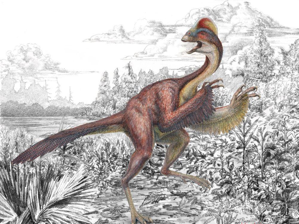 Oviraptorosaurian-pic-4