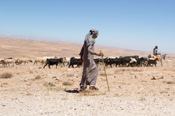 Bedouin Herdsman thumbnail