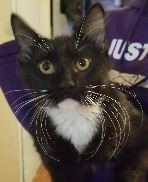 Handsome Tuxedo Cat thumbnail
