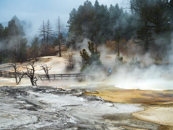 Yellowstone Steam and Fog thumbnail