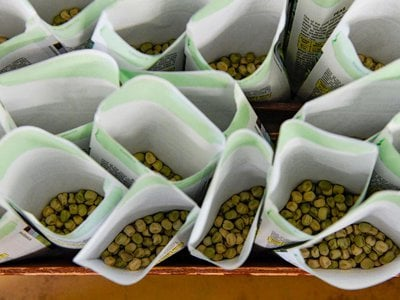 Paper packets are filled with pea seeds.