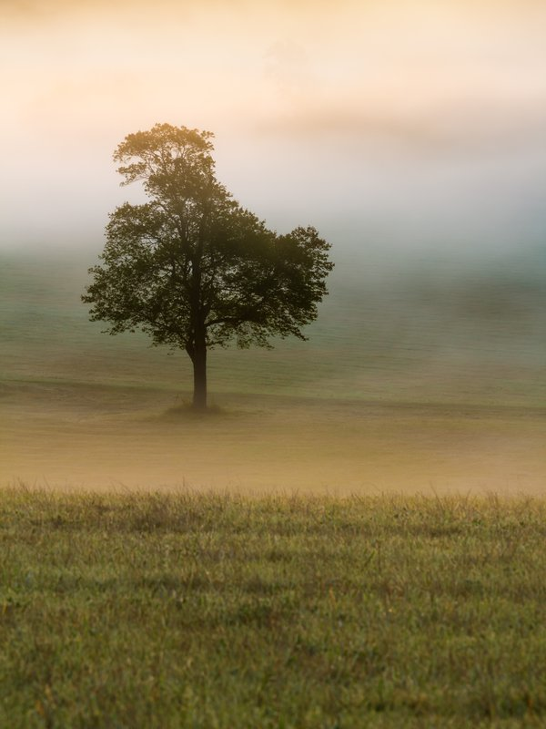 Lonely Tree in the Mist thumbnail