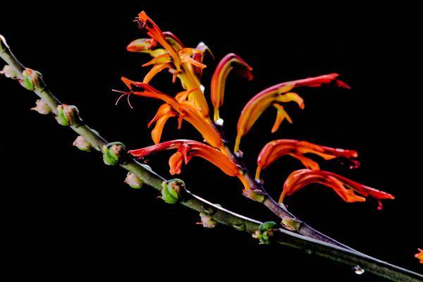 Blooming Flowers thumbnail