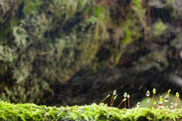 Dew and the spider web thumbnail
