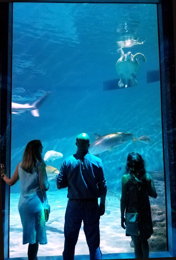 Onlookers watch a sea turtle at the Audubon Aquarium of the Americas. thumbnail