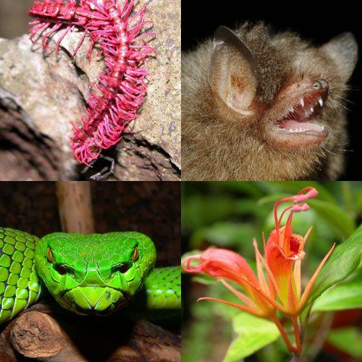 Species Hot spot