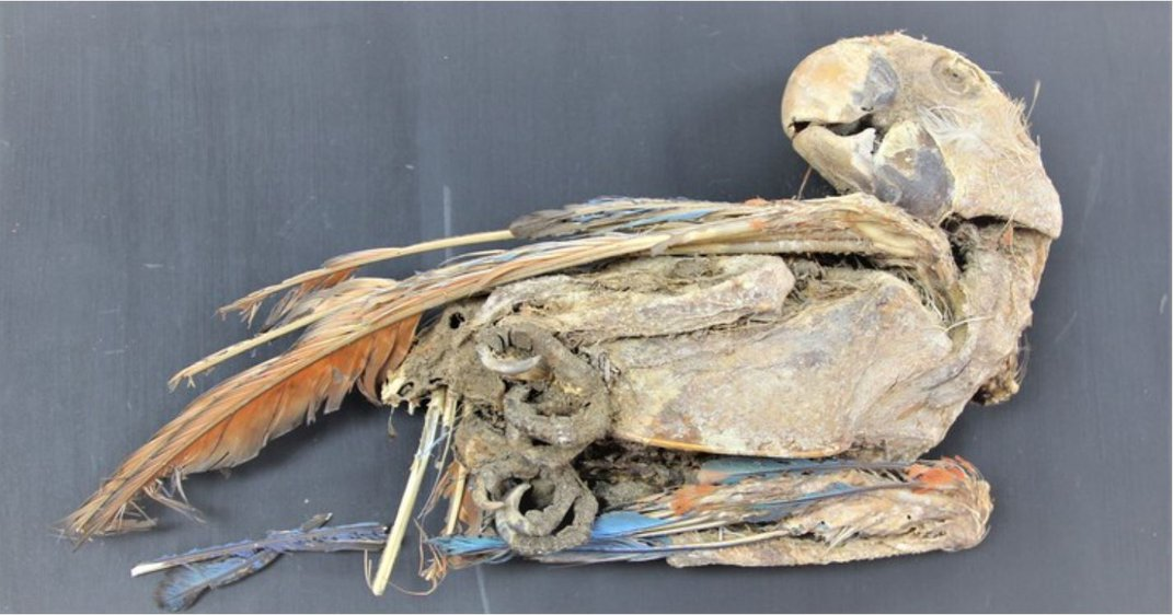 Mummified Parrots Found in Chile Suggest Vast Pre-Hispanic Trade Network
