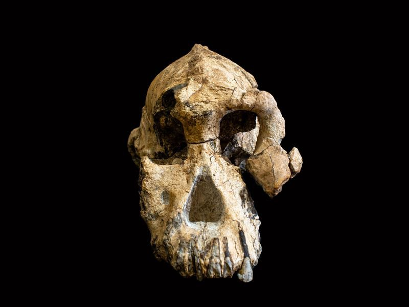 Here's What 2019 Scientific Discovery Taught Us About Our Human Origins