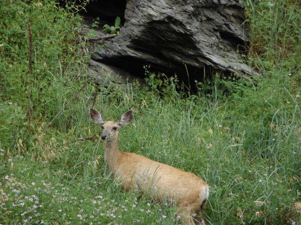 A Doe, A Deer thumbnail