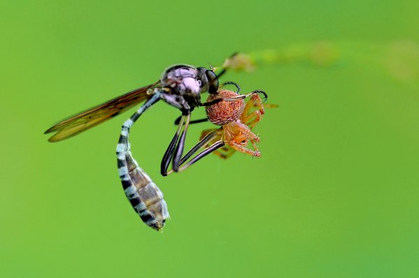 serangga kecilku thumbnail