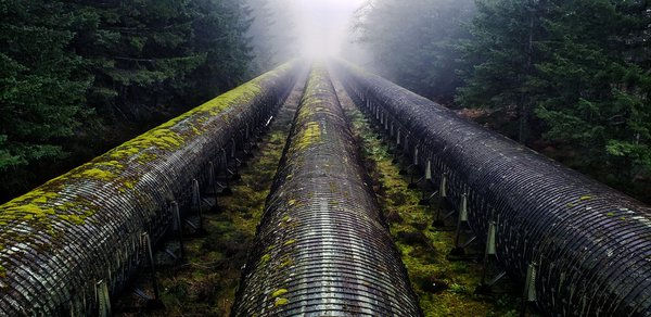 Mysterious Wooden Pipes in the Woods thumbnail