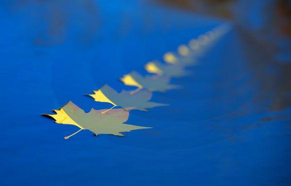 infinity leaf thumbnail