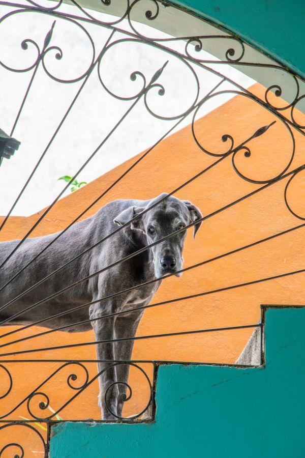 Mexican Dog thumbnail