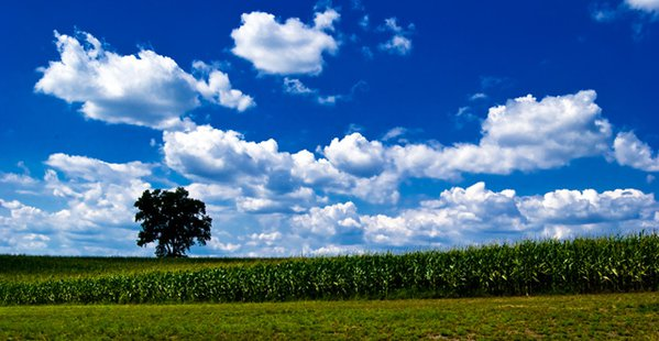 The only source of shade on a summer day on an Amish farm in Paradise, PA. thumbnail
