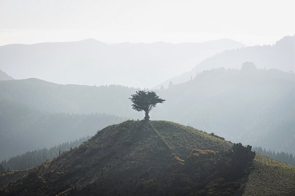 Lone Tree Standing thumbnail
