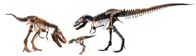 20110520083308tyrannosaurus-family.jpg