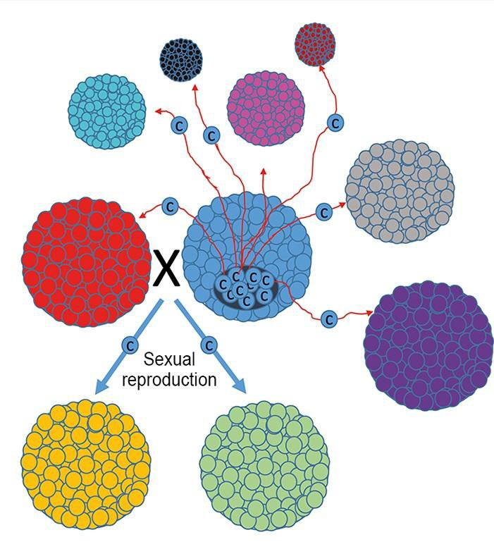 The Evolution of Sex Could Have Provided a Defense Against Cancer Cells