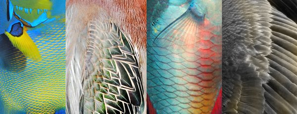 Homologues: Feathers and Scales thumbnail