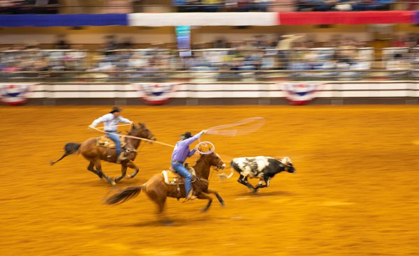 Ft Worth Rodeo  thumbnail