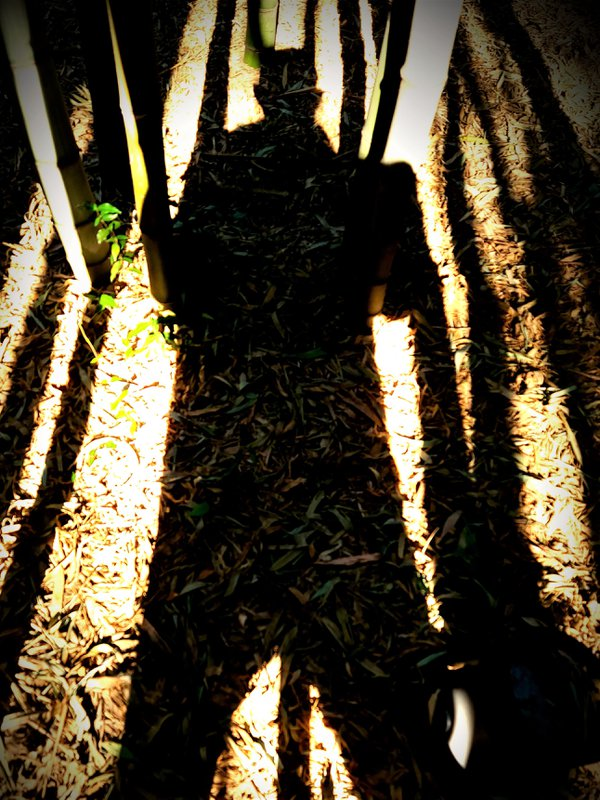 Silhouette - Bamboo forest fairy story thumbnail