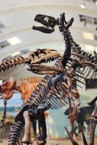 20110520083219allosaurus-camptosaurus-201x300.jpg