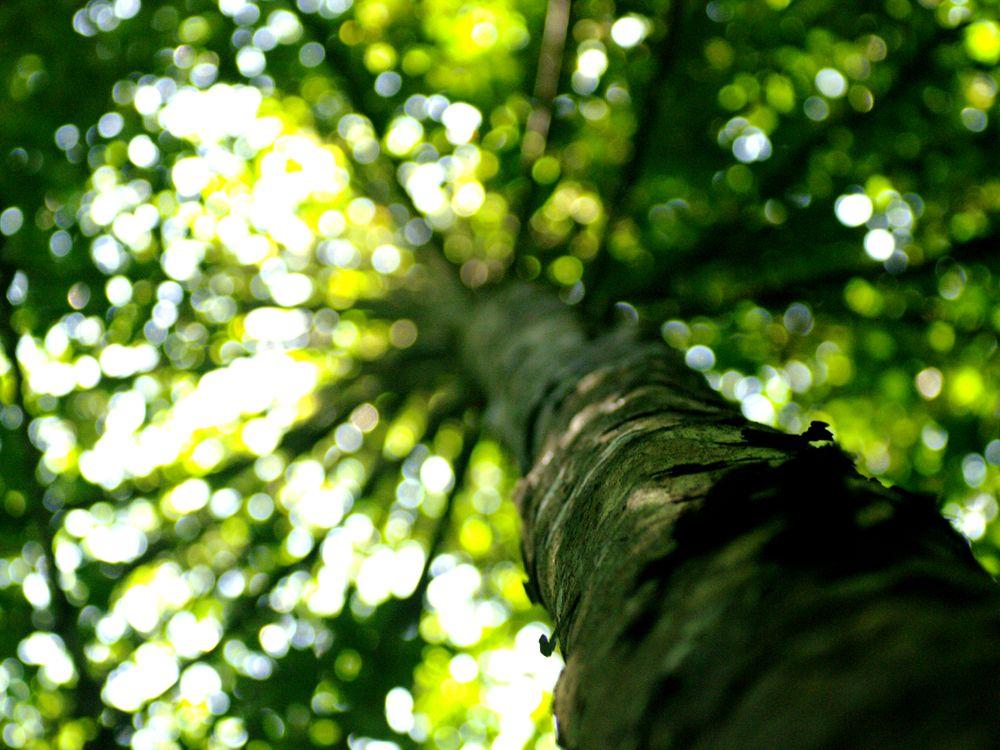 Tree Pollen Rainforest Archaeology