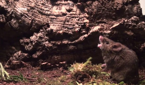 mouse-sing.jpg
