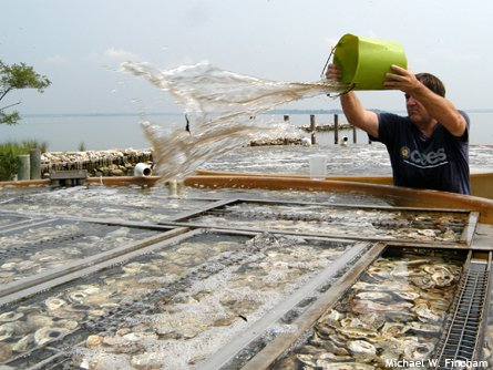 20110520104050who_killed_oyster.jpg