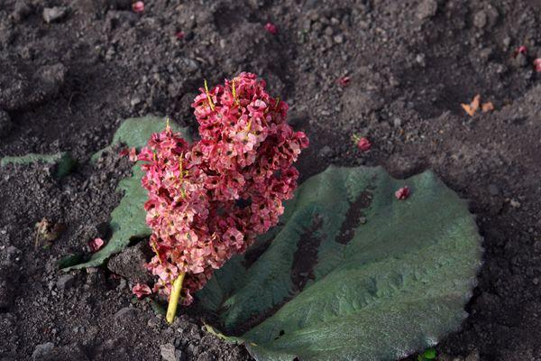 Unnamed flower. thumbnail