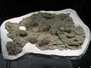 20110520083225dinosaur-eggs-300x225.jpg