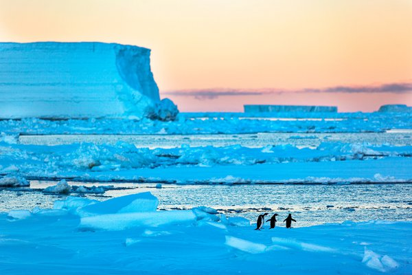 Adelie penguis in Ice of Ross Sea. Antarctica thumbnail
