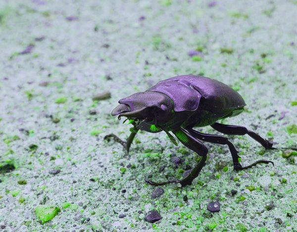 A Bugs Life thumbnail