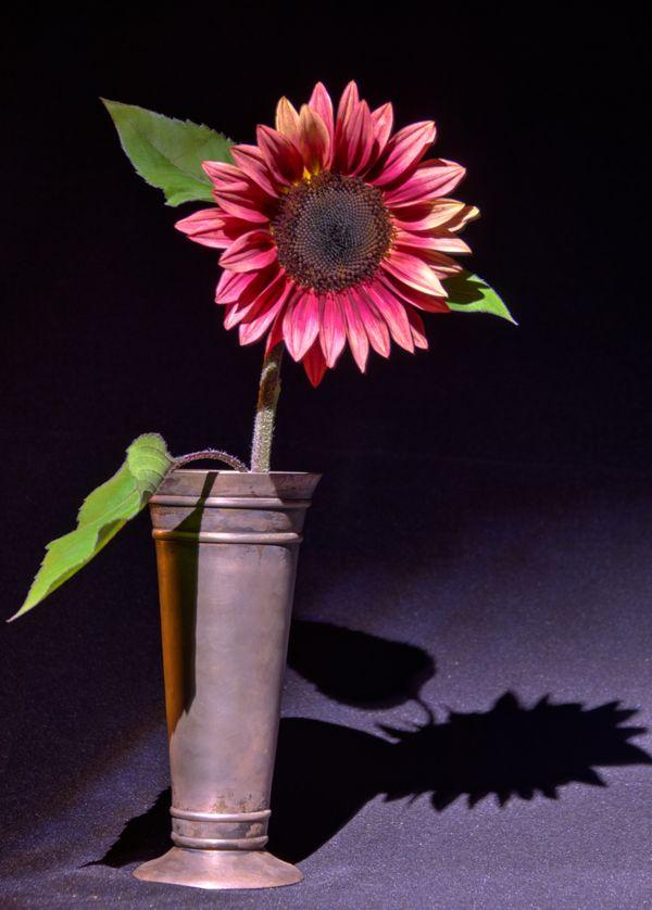Sunflower in Pewter 4 thumbnail