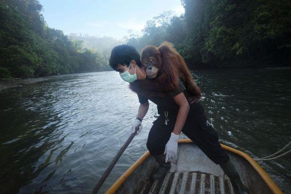 Saving Orangutans 19 thumbnail