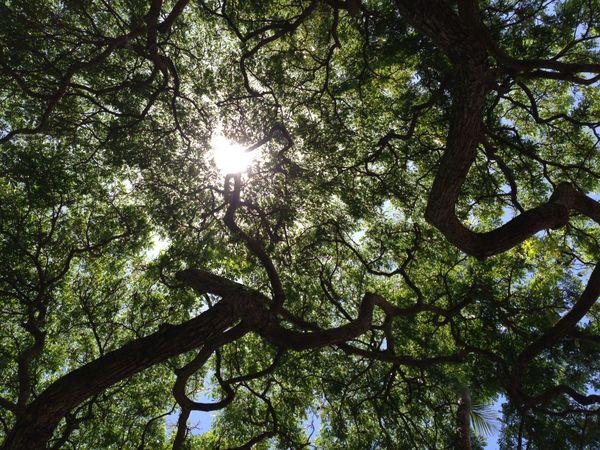 One Tree thumbnail