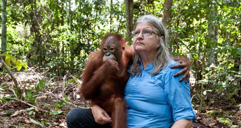 20110815094003imax-orangutan-born-to-be-wild.jpg