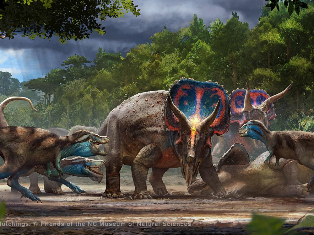 An artist's rendering of T. rex vs. Triceratops battle. On a muddy clearing, three Triceratops (one dead on the ground) are surrounded by several small, brown and blue T. rex. The clearing is surrounded by tall, lush trees.