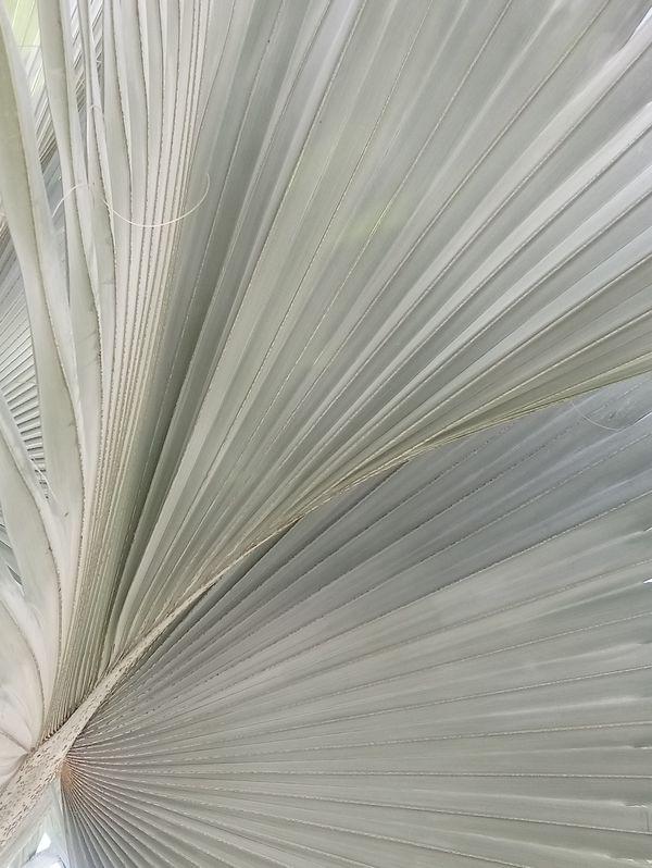 Leaf architecture thumbnail