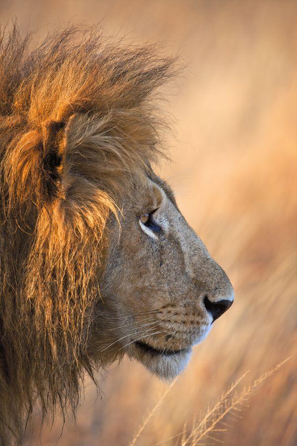 Lion's Mane thumbnail