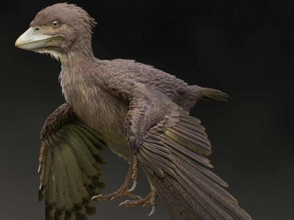 Bird Dino