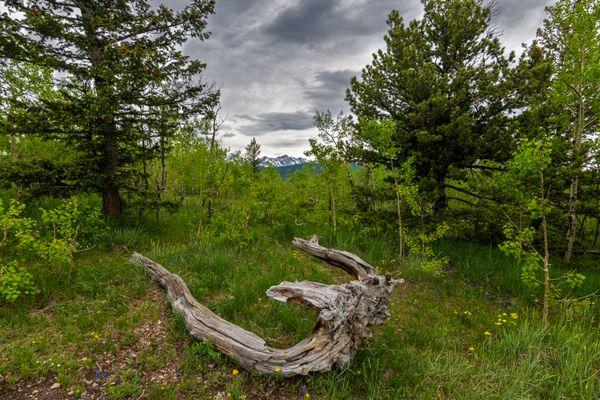Moody Afternoon at Bald Mountain thumbnail