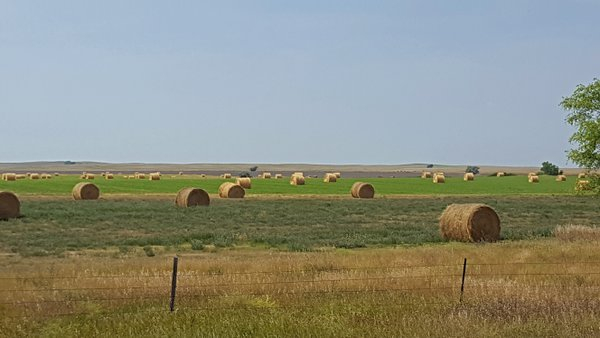 Hay bales created and ready to feed livestock in the coming winter thumbnail