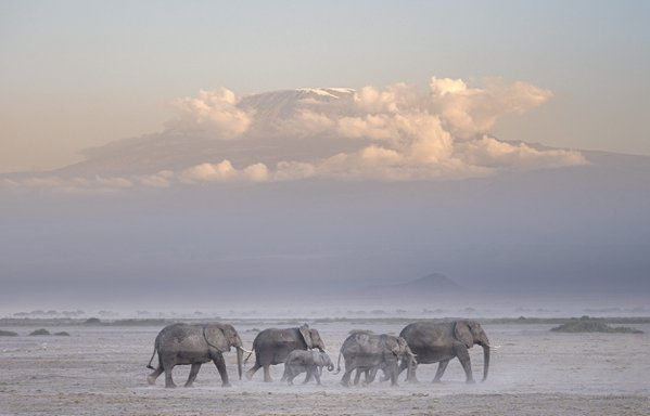 Elephants and Kilimanjaro thumbnail