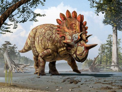 An artistic reconstruction of the Regaliceratops peterhewsi, the newly discovered Triceratops cousin with a built-in crown.