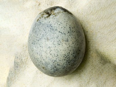 """The two cracked eggs emitted a """"sulfurous aroma"""" during excavation."""
