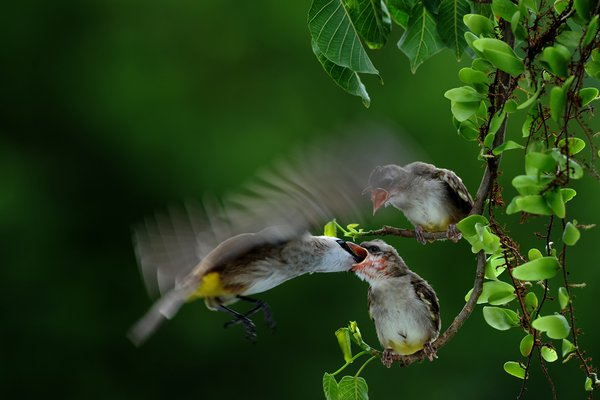 love of mother!!! sweet life of each bird thumbnail