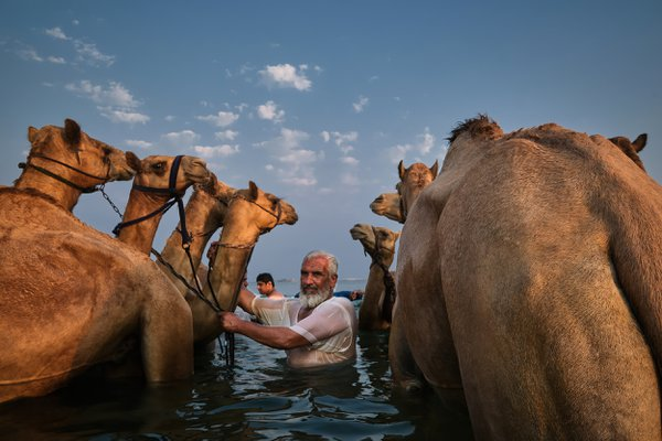 Taking care of their camels! thumbnail